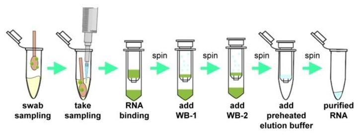 PCR kit folyamat
